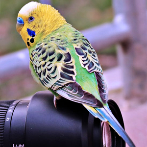 best camera for wildlife photography beginner