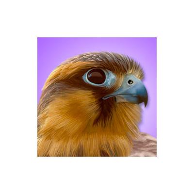 best iBird Pro birding app