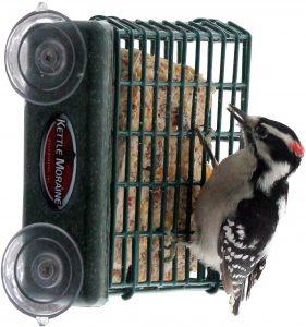 Kettle Moraine Window Mount Woodpecker Feeder