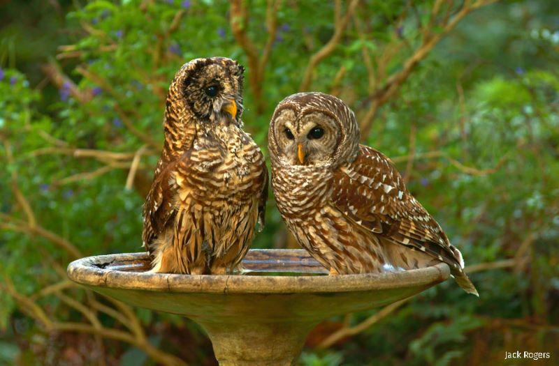 birds keeping cool in the backyard