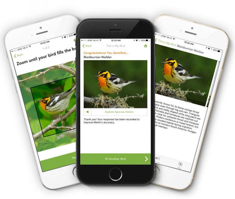 birding app