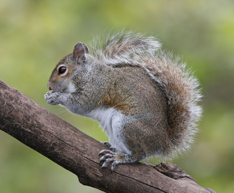 squirrel hanging out on a branch