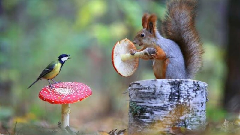 squirrel and a bird