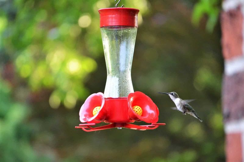 bird nectar feeder