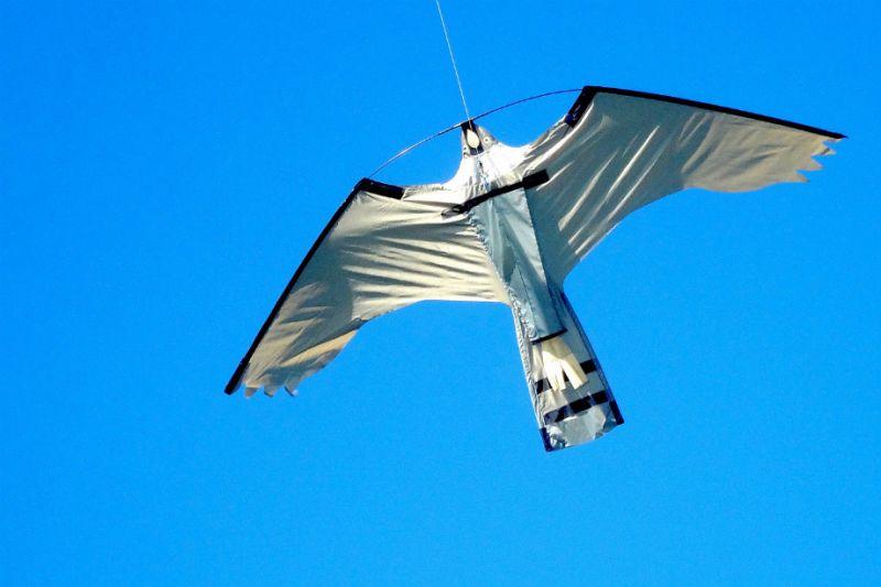 fright kite