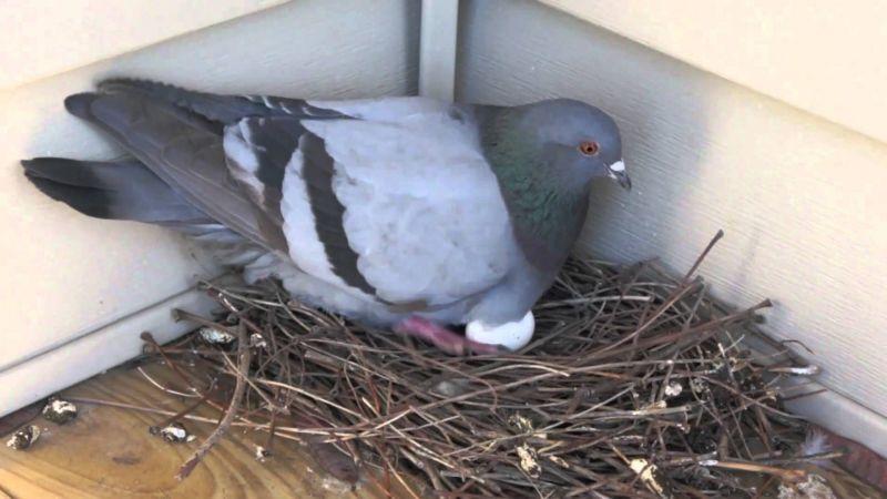 disheveled nest