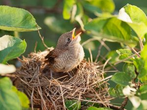 another baby bird