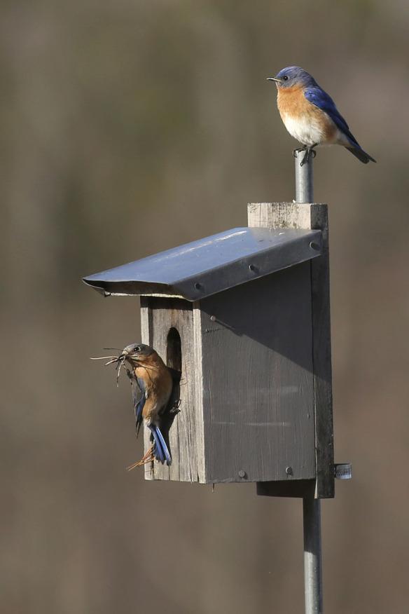 birds hanging at a bird house