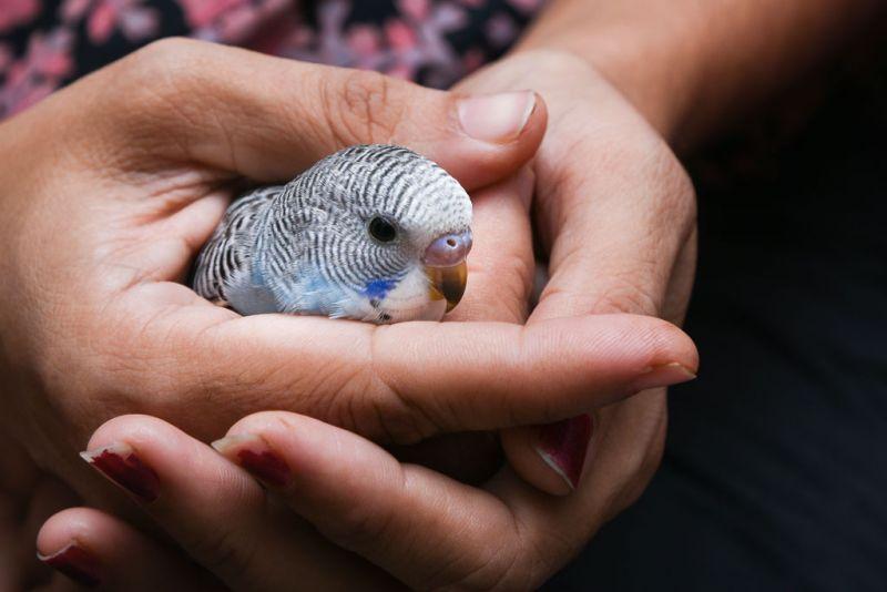 injured bird transport