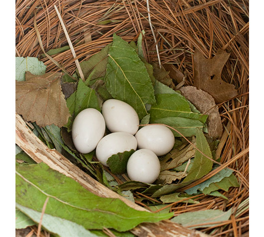 purple martin nest